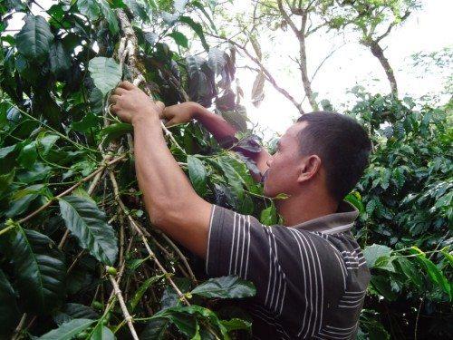 kaffe bonde