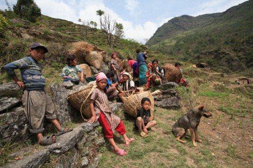 Bees-Nepal-Hunters05