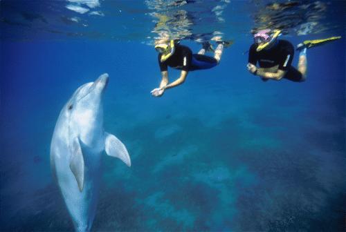 israel eilat delfin ferie vand