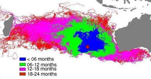 Computerberegning fra University of Western Australia over, hvor vragdele fra MH370 (den røde plet i det blå felt), kunne ende indenfor to år. Til højre er Australien, øen til venstre er Madagaskar – foran den ligger Reunion.