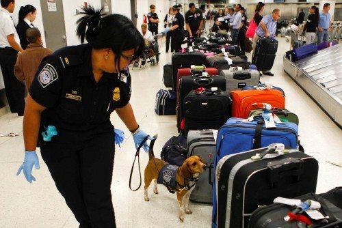 narko hund bagage lufthavn
