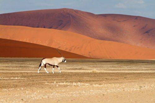 afrika, namibia